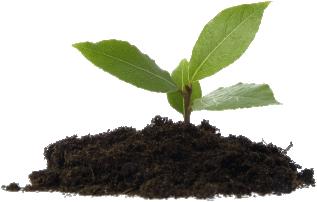 STS Empreendimentos Imobiliários Agindo com Responsabilidade Ambiental